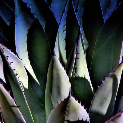 Photograph - Sunlit Cactus by David Patterson