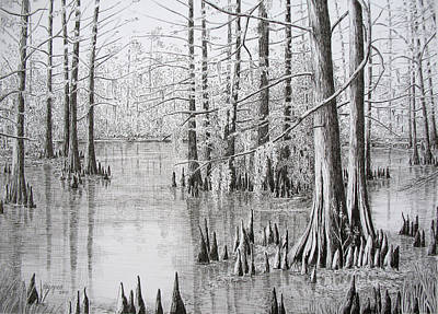 Cypress Swamp Drawing - Sunlit Cypress by Colleen Marquis