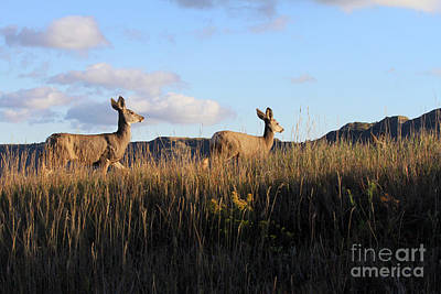Photograph - Sunlit Deer  by Paula Guttilla