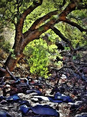 Digital Art - Sunlit Desert Canyon Tree by Barbara Chichester