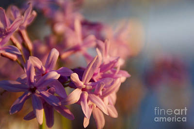 Photograph - Sunlit Dream by Linda Shafer