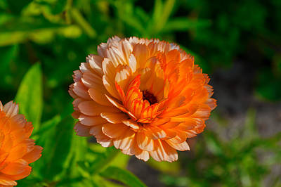 Photograph - Sunlit Floral by Cathy Mahnke