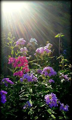 Sunlit Flowers Art Print