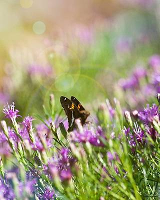 Photograph - Sunlit Garden by Nikki McInnes