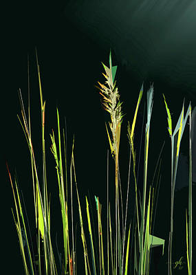 Digital Art - Sunlit Grasses by Gina Harrison