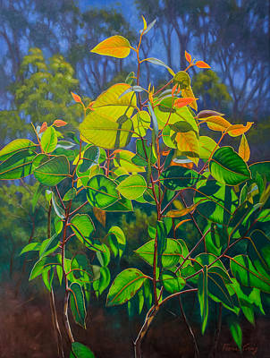 Gumtree Painting - Sunlit Gumleaves 15 by Fiona Craig