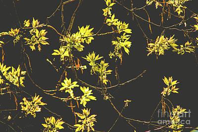 Photograph - Sunlit Leaf Buds by Cheryl Baxter