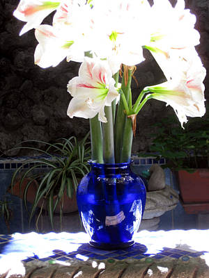 Photograph - Sunlit Lilies by Sarah Hornsby