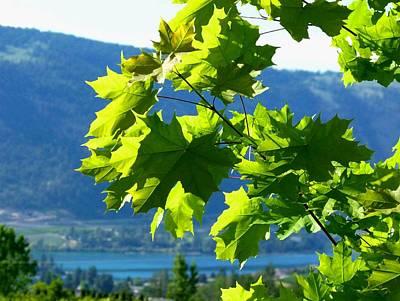Digital Art - Sunlit Maple Greenery by Will Borden