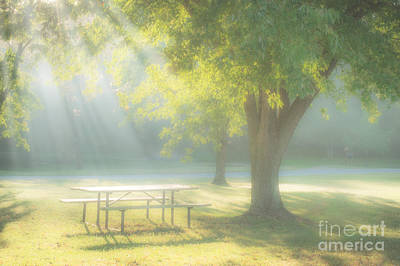 Photograph - Sunlit Morning by Tamyra Ayles