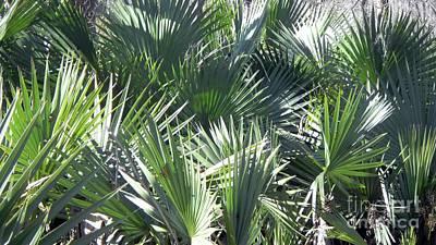 Photograph - Sunlit Palms by Rosanne Licciardi