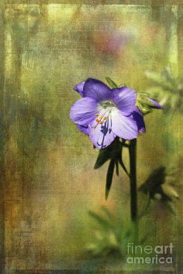 Digital Art - Sunlit Polemonium by Liz Alderdice