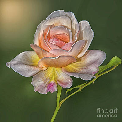 Digital Art - Sunlit Rose by Maggie Magee Molino