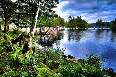 Photograph - Sunlit Shore At Covewood by David Patterson