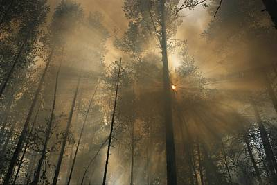 Natural Forces Photograph - Sunlit Smoke Whispers The Firefighters by Mark Thiessen
