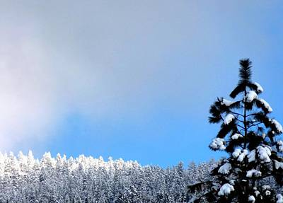 Photograph - Sunlit Snowy Brilliance by Will Borden