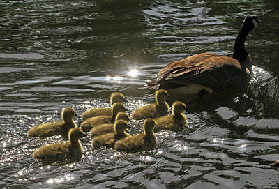 Baby Bird Photograph - Sunlit Stroll by Donna Kennedy