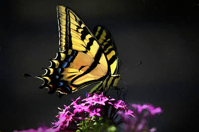 Photograph - Sunlit Swallowtail by Donna Kennedy