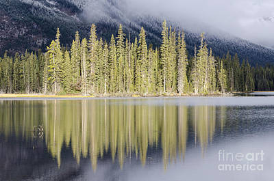 Photograph - Sunlit Tree Reflection by Dee Cresswell