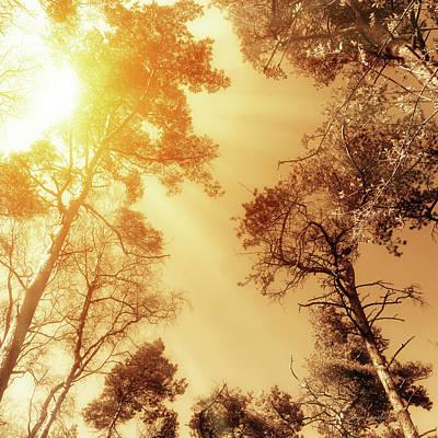 Photograph - Sunlit Tree Tops by Wim Lanclus