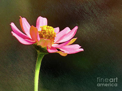 Photograph - Sunlit Uplifting Beauty by Sue Melvin