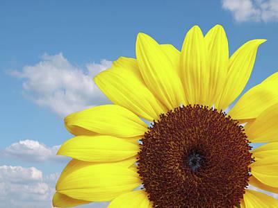 Photograph - Sunlover by Gill Billington