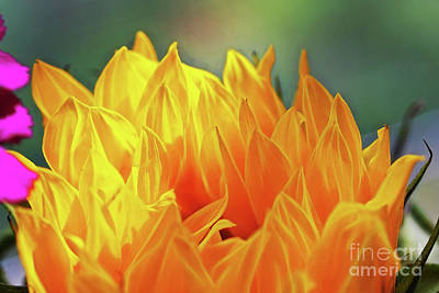Photograph - Sunlower Flames by Patti Whitten