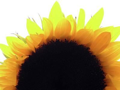 Photograph - Sunflower Rise by Joseph Hedaya