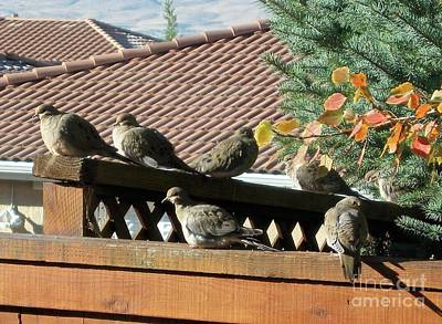 Photograph - Sunning Doves by Phyllis Kaltenbach