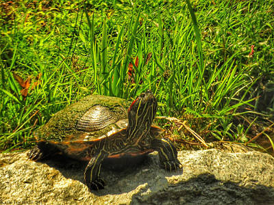 Photograph - Sunning by Kathi Isserman