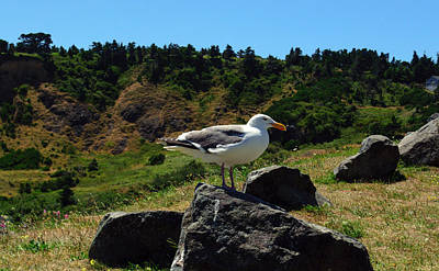 Photograph - Sunning Seagull by Tikvah's Hope