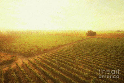 Grape Digital Art - Sunrise Over The Vineyard by Diane Diederich