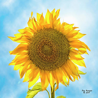 Photograph - Sunny And Bright by Peg Runyan