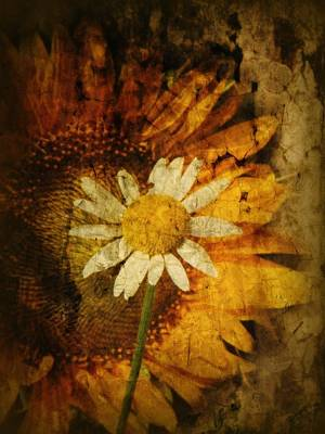 Floral Digital Art Photograph - Sunny Antiqued by Tingy Wende