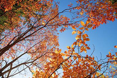 Photograph - Sunny Autumn Days In Hoyt Arboretum by Kunal Mehra