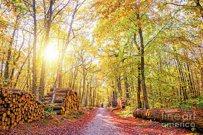 Photograph - Sunny Autumn by Delphimages Photo Creations