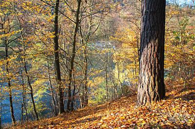 Sunny Autumn On The Lake Art Print