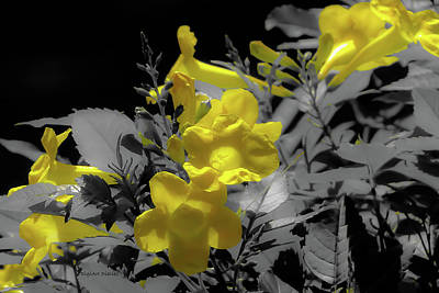 Photograph - Sunny Blooms by DigiArt Diaries by Vicky B Fuller