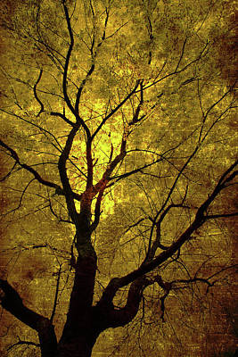 Sunny Branches Art Print by Gray  Artus