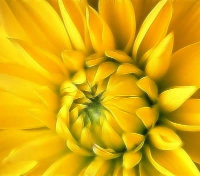 Sunny D Original