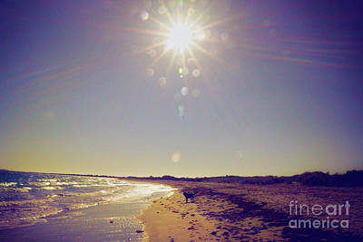 Photograph - Sunny Day by Cassandra Buckley