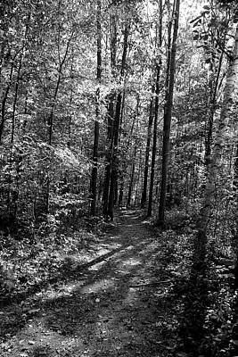 Photograph - Sunny Day Forest Path Bw by Mary Bedy