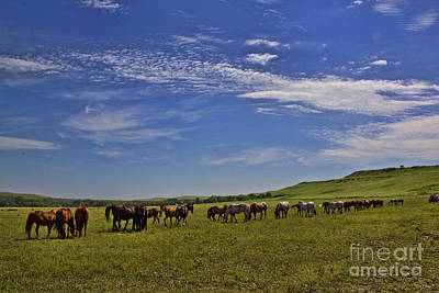 Photograph - Sunny Day In The Flint Hills by Crystal Nederman