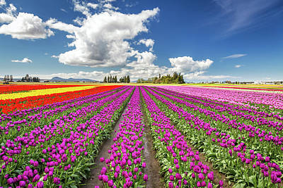 Photograph - Sunny Day In The Tulip Field by Pierre Leclerc Photography