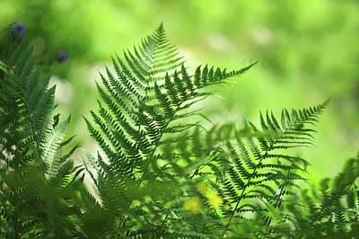 Photograph - Sunny Days. Green World  by Jenny Rainbow