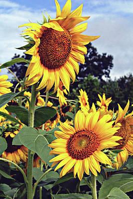 Photograph - Sunny Days by Jessica Brawley
