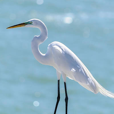 Art Print featuring the photograph Sunny Egret by Steven Sparks