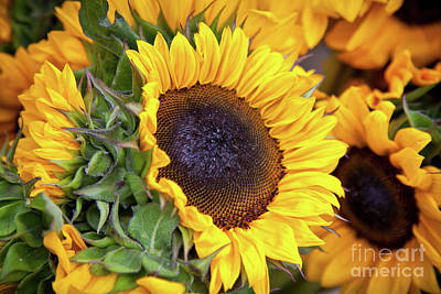 Art Print featuring the photograph Sunny Face by Susan Cole Kelly