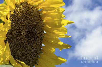 Photograph - Sunny Faces And Blue Skies by Debra Fedchin
