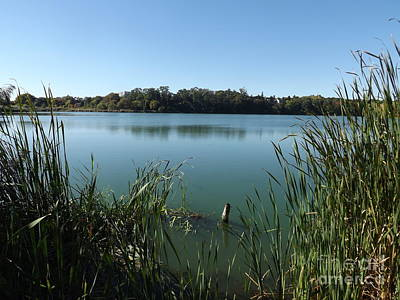 Photograph - Sunny Fall Afternoon In Grenadier Pond High Park by Lingfai Leung